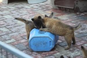 terror puppies!!
